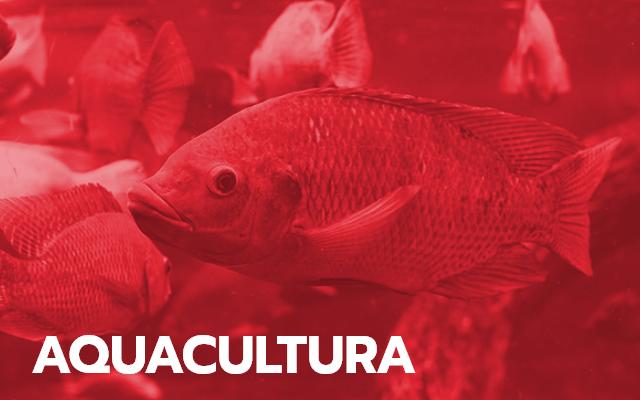 Soluções para aquacultura