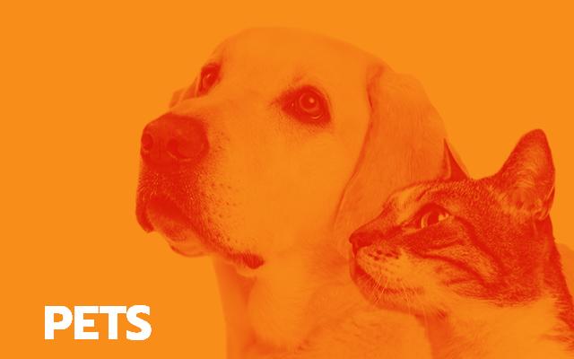 Soluções para pets