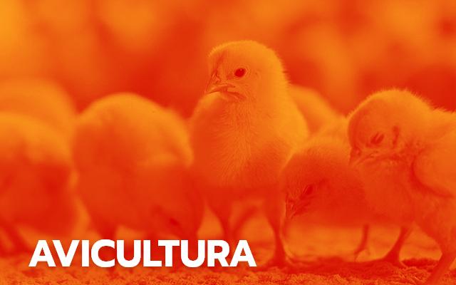 Soluções para avicultura
